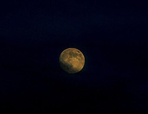 luna-bella